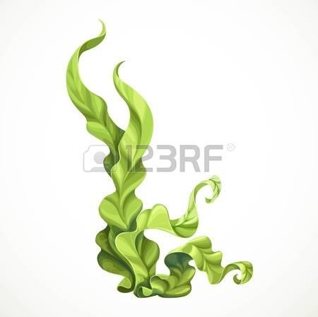Algae clipart #4, Download drawings