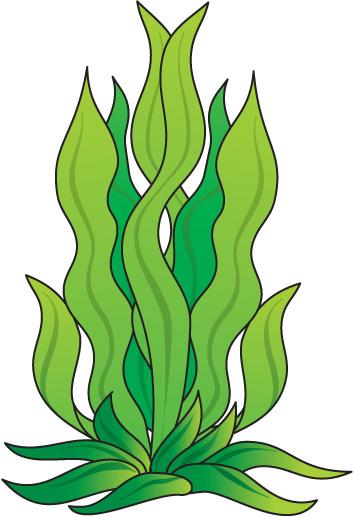 Algae clipart #9, Download drawings