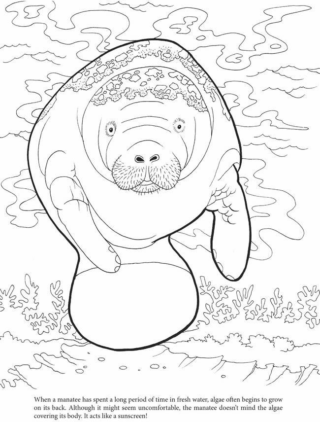 Algae coloring #2, Download drawings