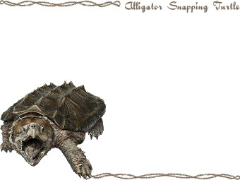 Alligator Snapping Turtle clipart #5, Download drawings