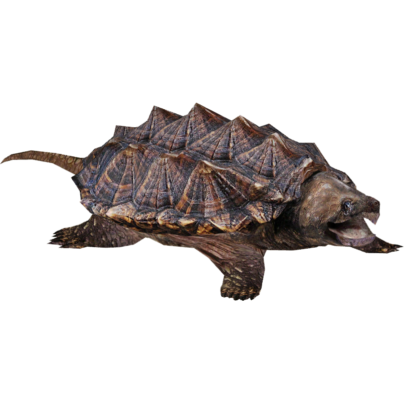 Alligator Snapping Turtle clipart #1, Download drawings