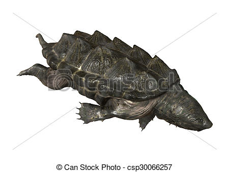Alligator Snapping Turtle clipart #9, Download drawings