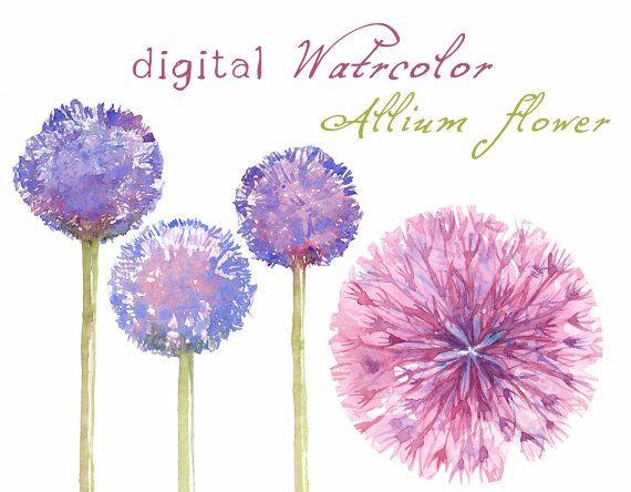 Allium clipart #14, Download drawings