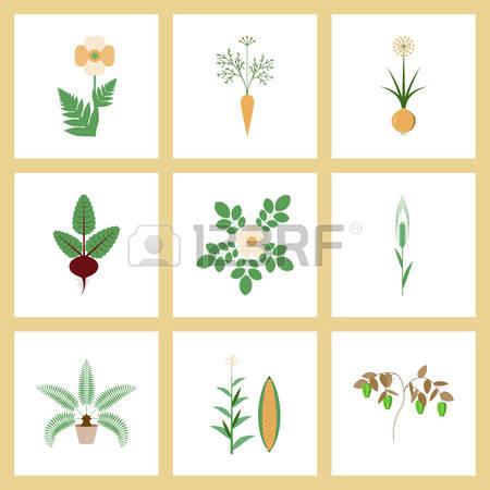 Allium clipart #11, Download drawings