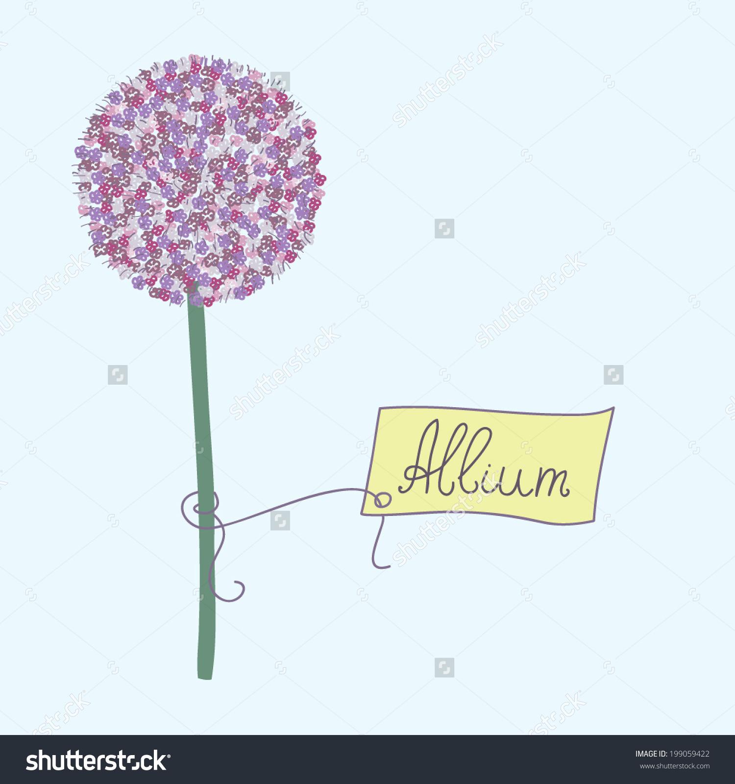Allium clipart #5, Download drawings