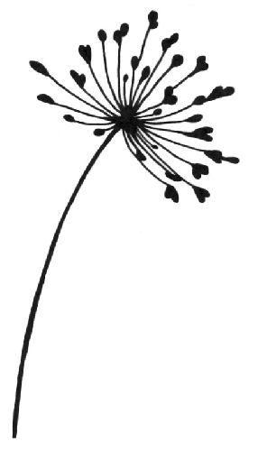 Allium clipart #1, Download drawings