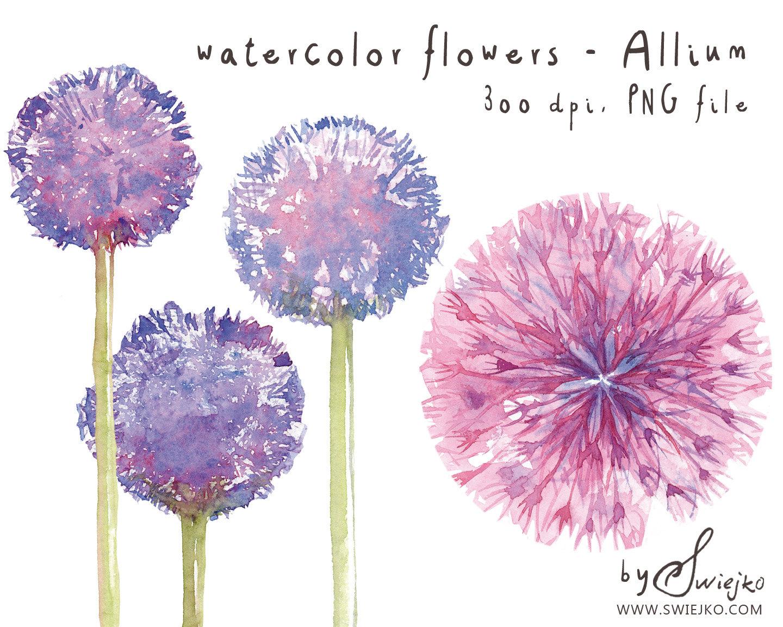 Allium clipart #3, Download drawings
