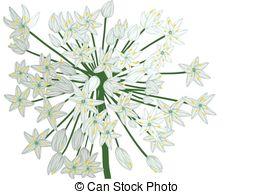 Allium clipart #12, Download drawings