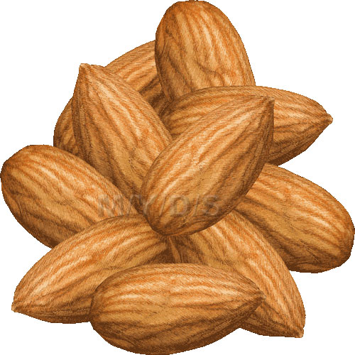 Almond clipart #8, Download drawings