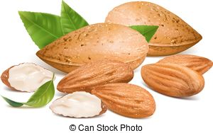 Almond clipart #17, Download drawings
