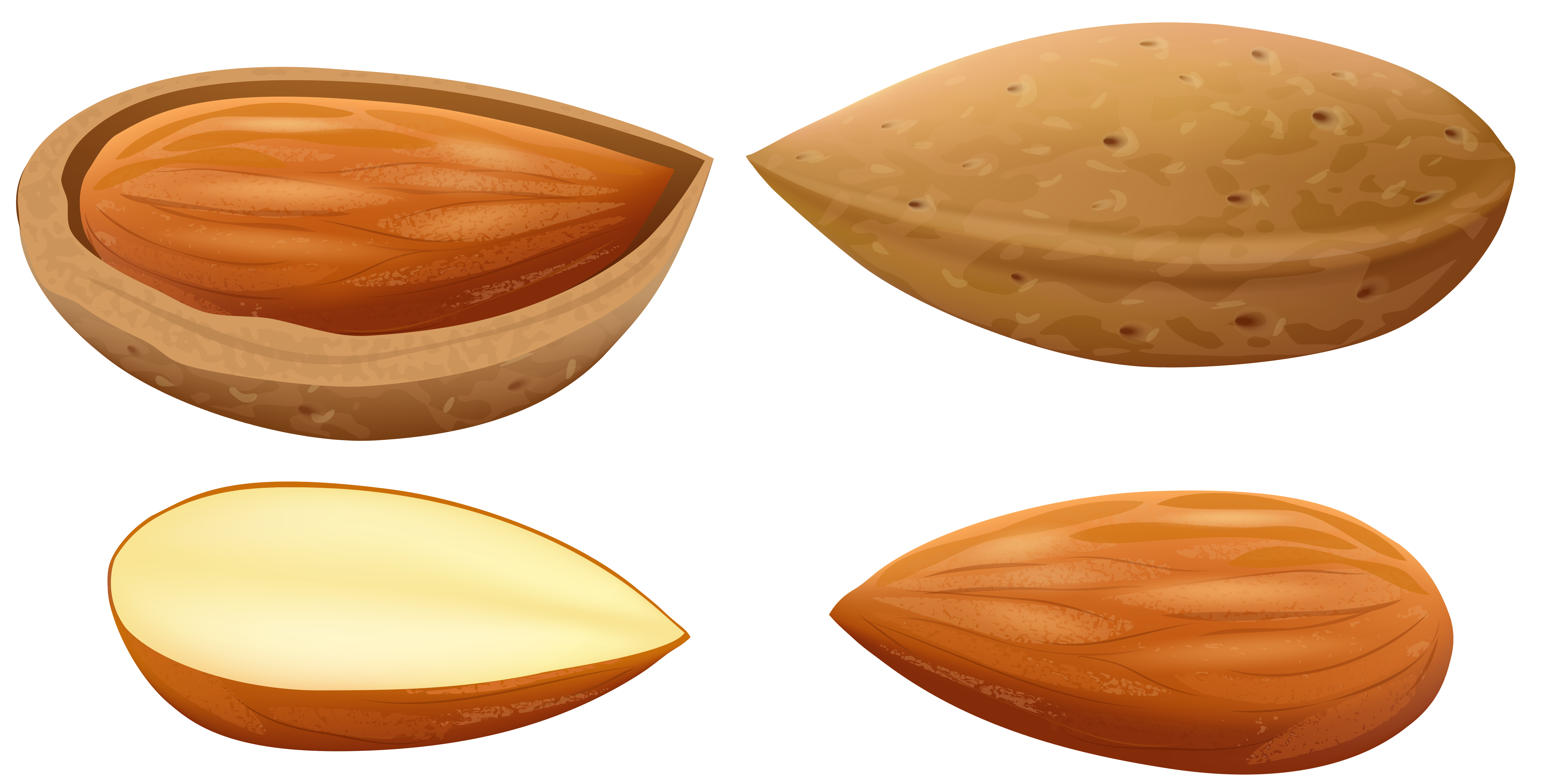 Almond clipart #4, Download drawings