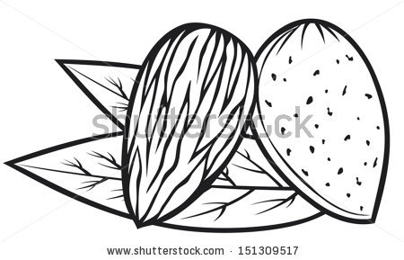 Almond clipart #3, Download drawings