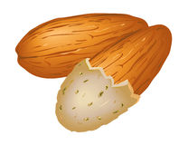 Almond clipart #13, Download drawings