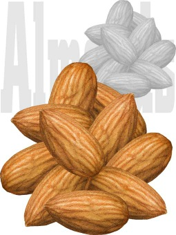 Almond clipart #6, Download drawings
