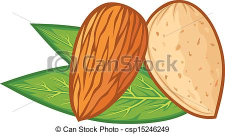 Almond clipart #18, Download drawings