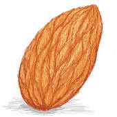 Almond clipart #16, Download drawings