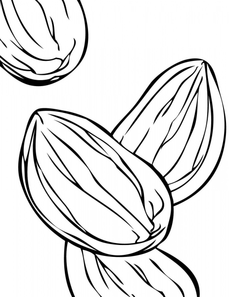 Almond coloring #19, Download drawings