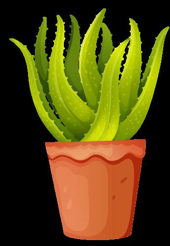 Aloe Vera clipart #1, Download drawings