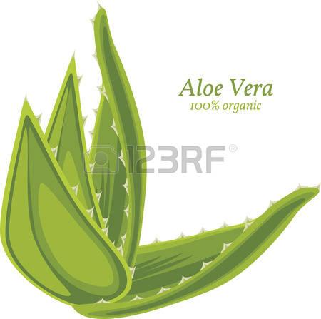 Aloe Vera clipart #3, Download drawings
