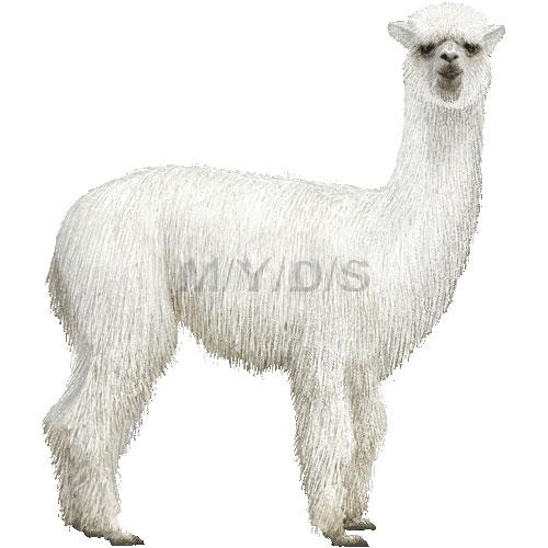 Alpaca clipart #8, Download drawings