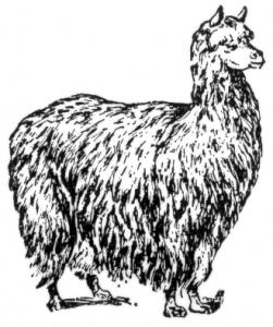 Alpaca clipart #3, Download drawings