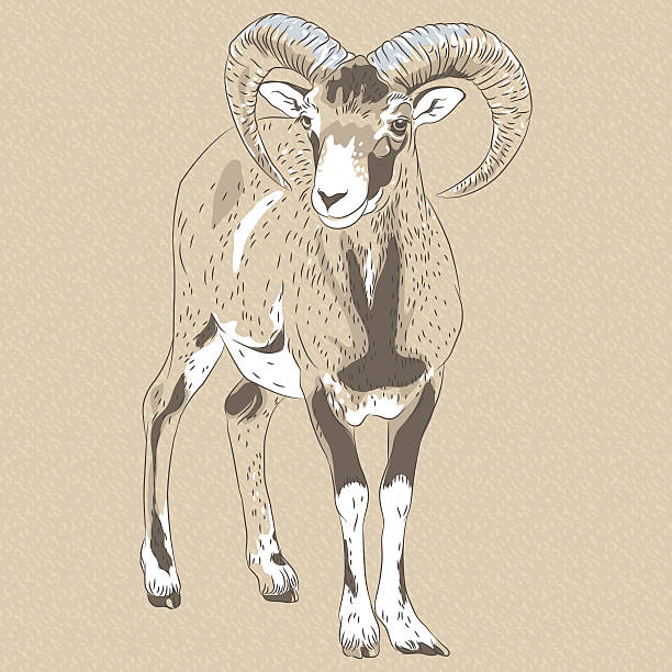 Alpine Ibex clipart #1, Download drawings