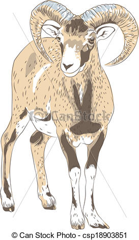 Alpine Ibex clipart #8, Download drawings