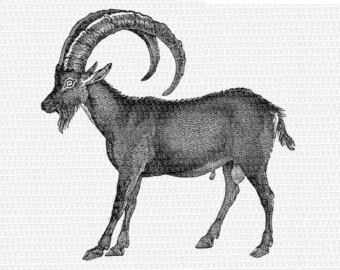 Alpine Ibex clipart #20, Download drawings