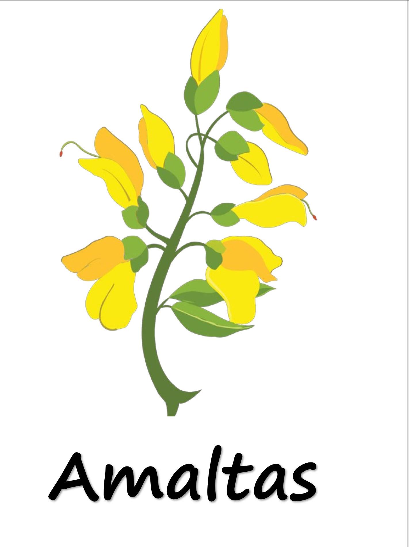Amaltas clipart #9, Download drawings