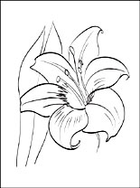 Amaryllis coloring #11, Download drawings