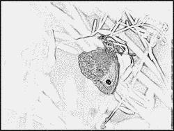 Amaryllis coloring #6, Download drawings