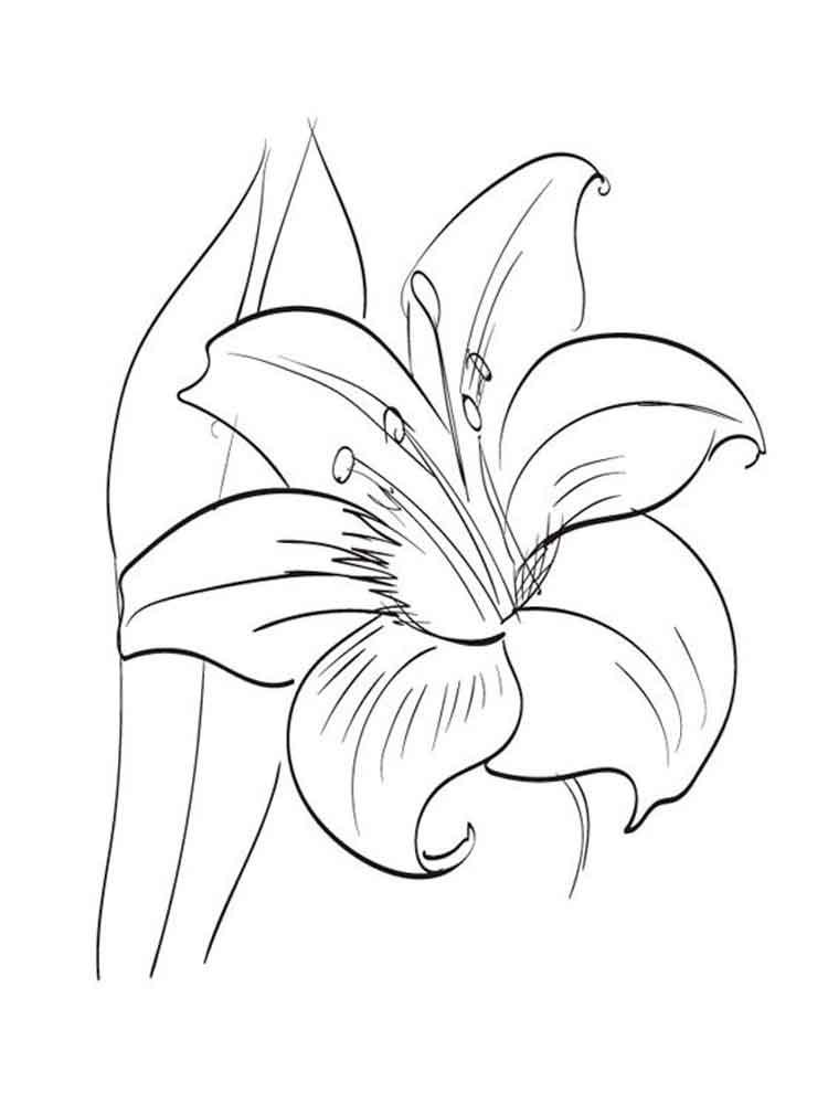 Amaryllis coloring #13, Download drawings