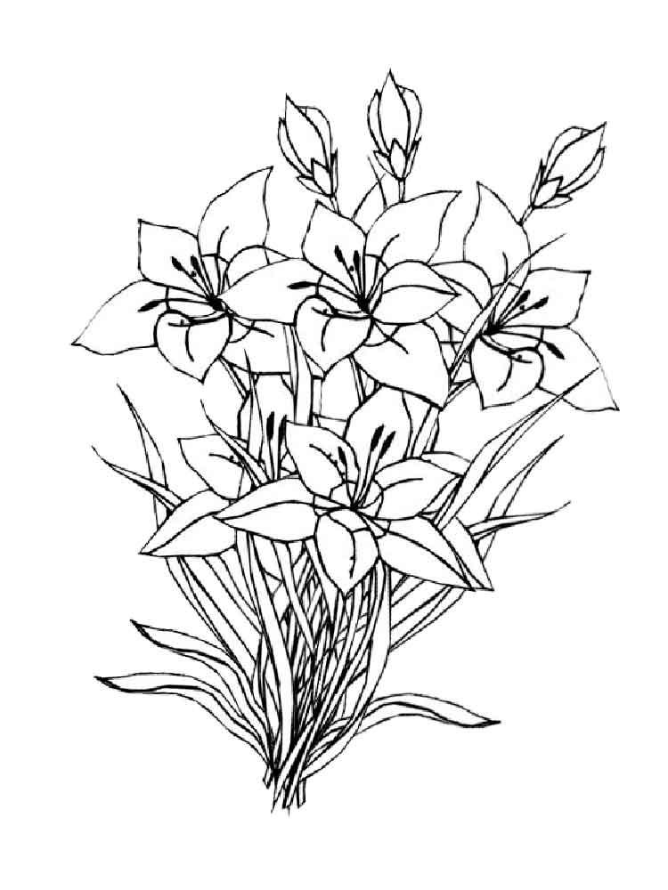 Amaryllis coloring #12, Download drawings