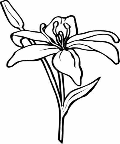 Amaryllis coloring #17, Download drawings