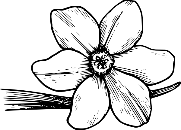 Dogwood svg #19, Download drawings