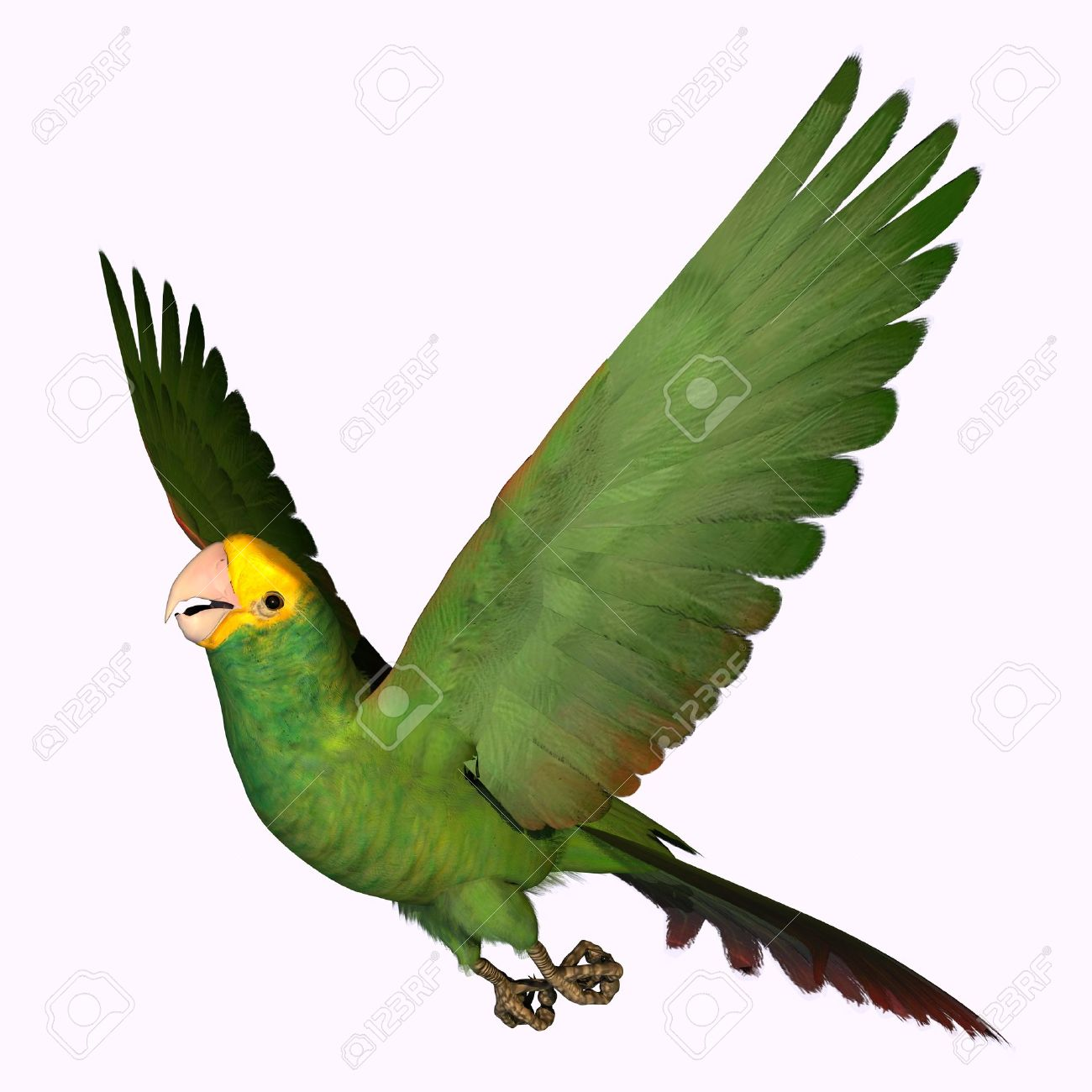 Amazon Parrot clipart #9, Download drawings