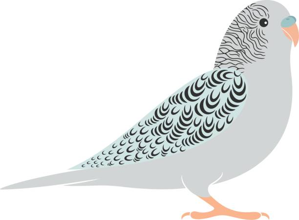 Amazon Parrot clipart #6, Download drawings