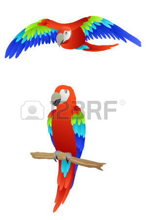 Amazon Parrot clipart #8, Download drawings
