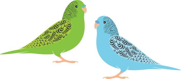 Amazon Parrot clipart #4, Download drawings