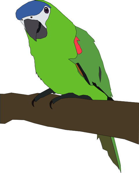 Amazon Parrot clipart #16, Download drawings