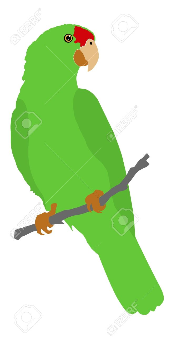 Amazon Parrot clipart #14, Download drawings