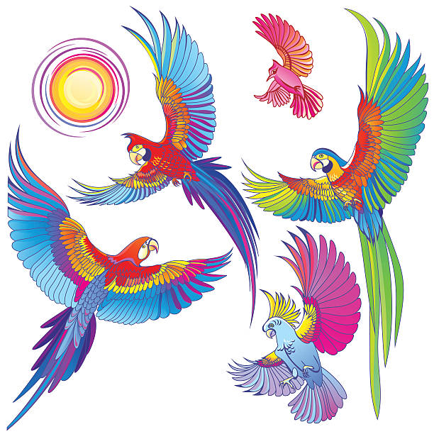 Amazon Parrot clipart #15, Download drawings