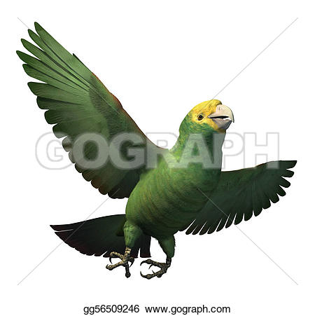 Amazon Parrot clipart #18, Download drawings