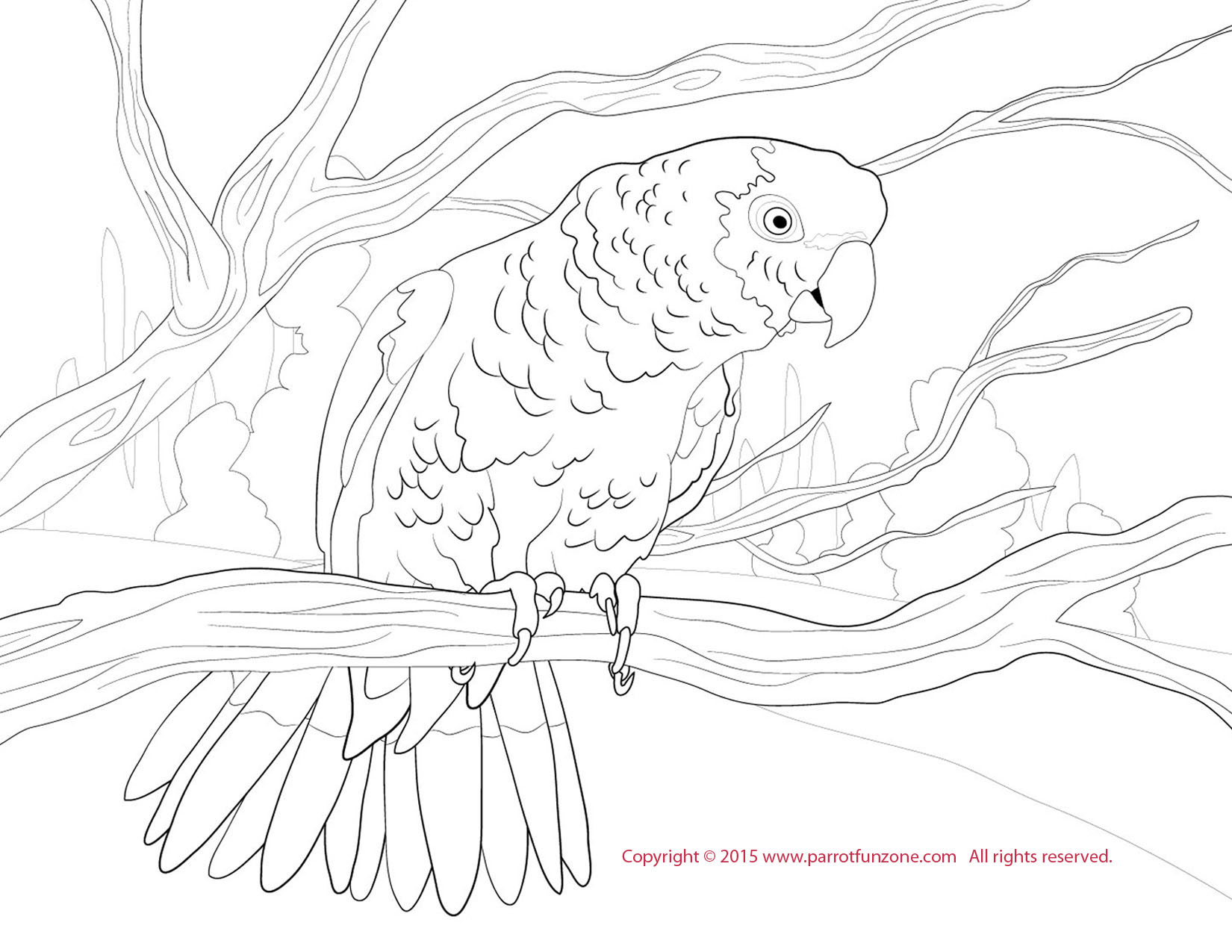 Red-lored Amazon coloring #18, Download drawings