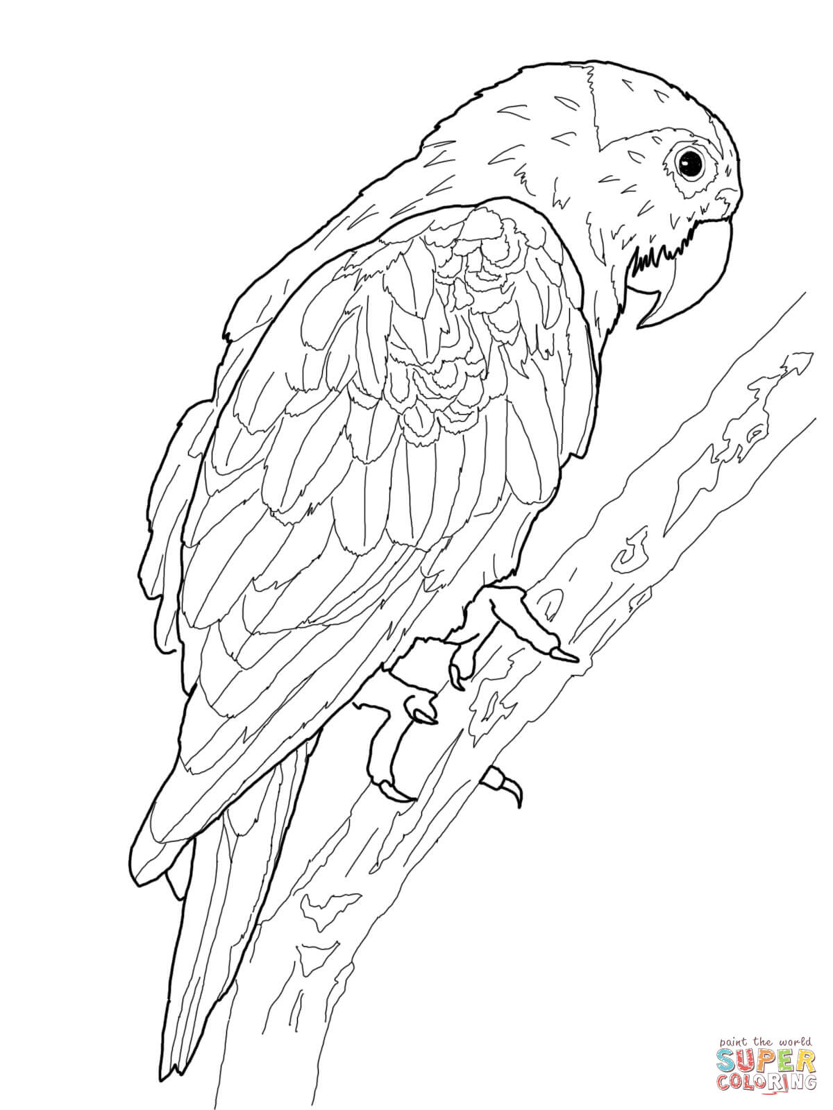 King Parrot coloring #12, Download drawings