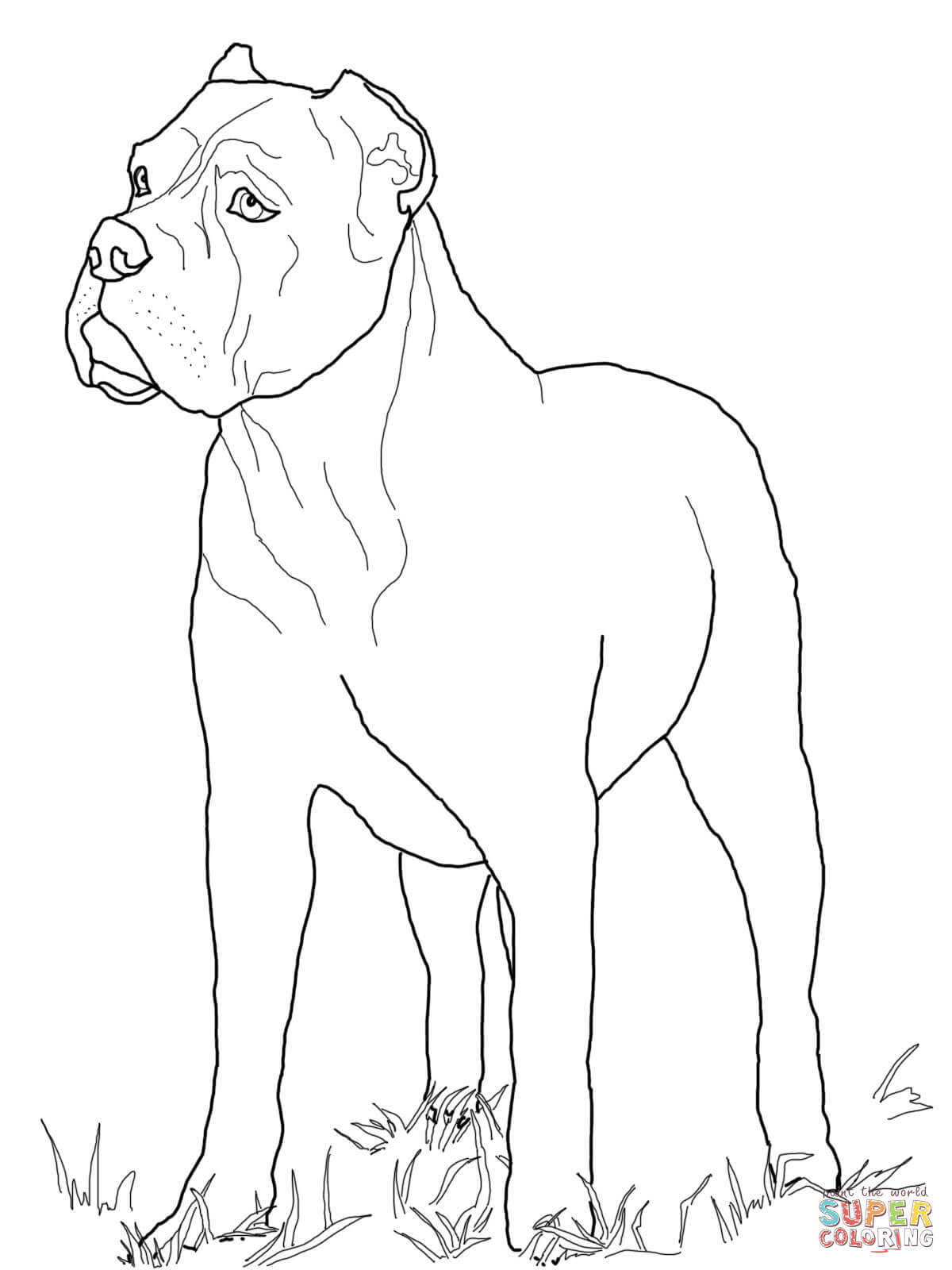 Cane Corso coloring #14, Download drawings
