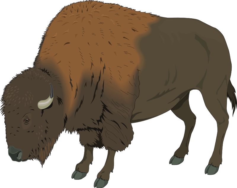 Bison clipart #7, Download drawings