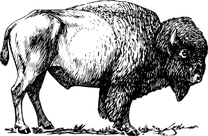American Bison clipart #14, Download drawings