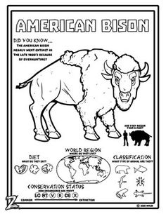 American Bison coloring, Download American Bison coloring ...