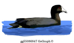 American Coot clipart #8, Download drawings